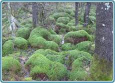 Naturpark Hohes Venn